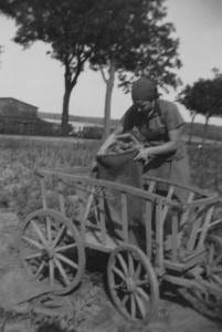 Potato harvest near Scharnhorst (Photograph: Elisabeth Noelle, 1936)